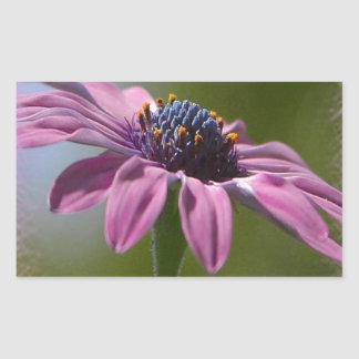 Pink African Daisy Happy Birthday