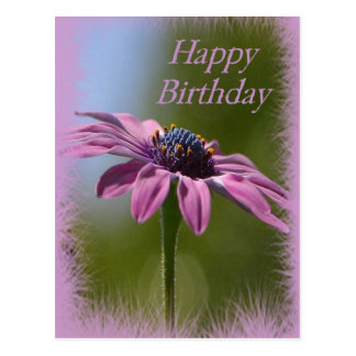 Pink African Daisy Happy Birthday Postcard