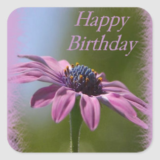 Pink African Daisy Happy Birthday Square Sticker