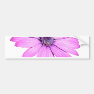 Pink Afrıcan Daisy With Transparent Background Bumper Sticker