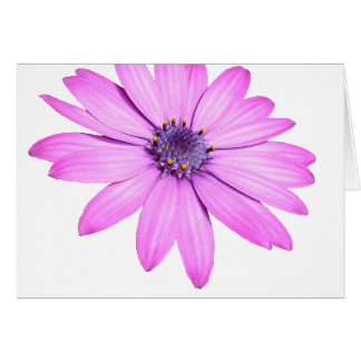 Pink Afrıcan Daisy With Transparent Background Card