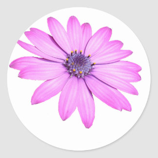 Pink Afrıcan Daisy With Transparent Background Classic Round Sticker
