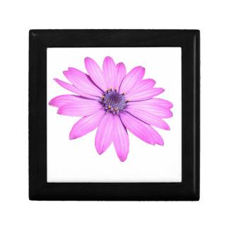Pink Afrıcan Daisy With Transparent Background Gift Box