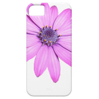 Pink Afrıcan Daisy With Transparent Background iPhone 5 Cases