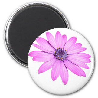 Pink Afrıcan Daisy With Transparent Background Magnet