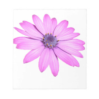 Pink Afrıcan Daisy With Transparent Background Notepad