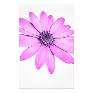 Pink Afrıcan Daisy With Transparent Background Stationery