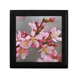 Pink Against A Gray Sky Japanese Cherry Blossoms Gift Box
