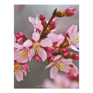 Pink Against A Gray Sky Japanese Cherry Blossoms Letterhead