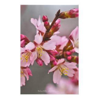 Pink Against A Gray Sky Japanese Cherry Blossoms Stationery