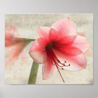 Pink Amaryllis Floral Print