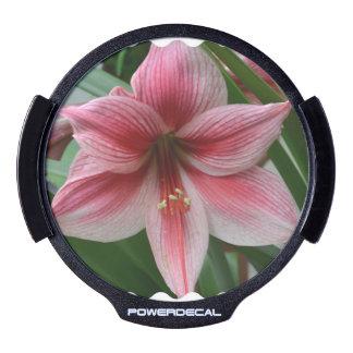 Pink Amaryllis LED Window Decal