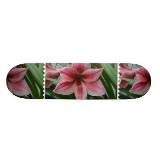 Pink Amaryllis Skate Board Decks