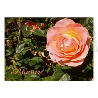 Pink Amour Rose Blank Card