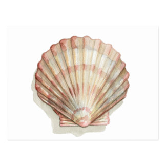 Pink and Cream Seashell Postcard