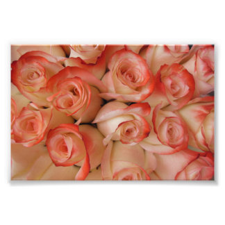 Pink and Peach Roses Photograph