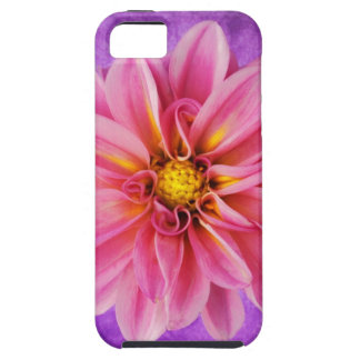 pink and purple dahlia on hand painted background iPhone 5 cover