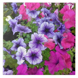 Pink and Purple Petunia Blossom Tile
