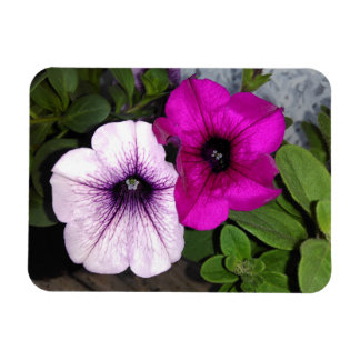 Pink And Purple Petunia Magnet