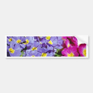 Pink and purple primroses bumper sticker