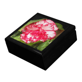 Pink and White Begonia Floral Gift Boxes