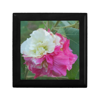 pink and white changeable hibiscus bloom gift box