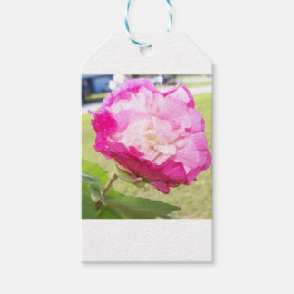 pink and white changeable hibiscus bloom gift tags