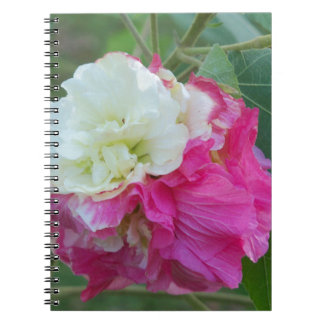 pink and white changeable hibiscus bloom notebook