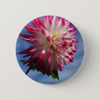 Pink and White Dahlia Button