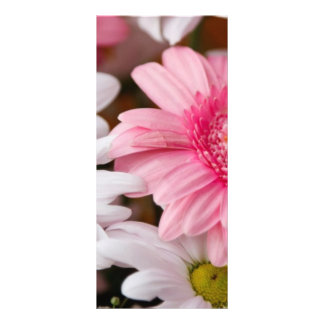 Pink and White Daisies Rack Card Design