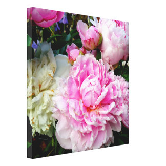 Pink and White Peonies Canvas Print
