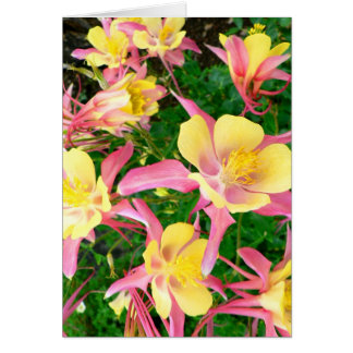 Pink and Yellow Columbines Card