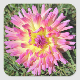 pink and yellow dahlia sticker