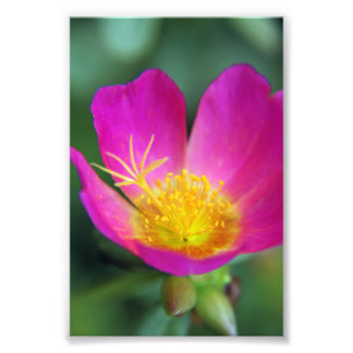 Pink and Yellow Flower Art Photo
