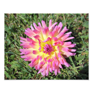 pink and yellow photo print