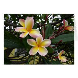 Pink and Yellow Plumeria Flowers from Hawaii Card