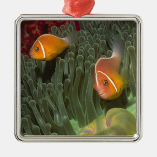 Pink Anemonefish in Magnificant Sea Anemone Metal Ornament