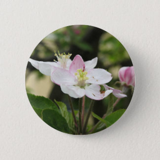 Pink apple flower in spring . Tuscany, Italy 2 Inch Round Button