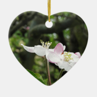 Pink apple flower in spring . Tuscany, Italy Ceramic Heart Ornament