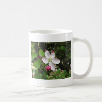 Pink apple flower in spring . Tuscany, Italy Coffee Mug