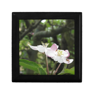 Pink apple flower in spring . Tuscany, Italy Gift Box
