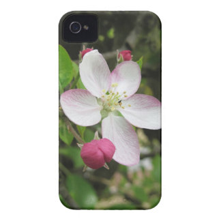 Pink apple flower in spring . Tuscany, Italy iPhone 4 Case-Mate Cases
