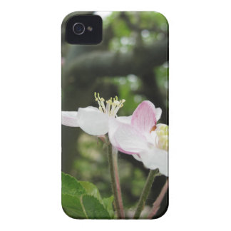 Pink apple flower in spring . Tuscany, Italy iPhone 4 Cover