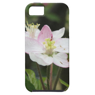 Pink apple flower in spring . Tuscany, Italy iPhone 5 Case