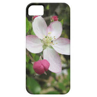 Pink apple flower in spring . Tuscany, Italy iPhone 5 Cases