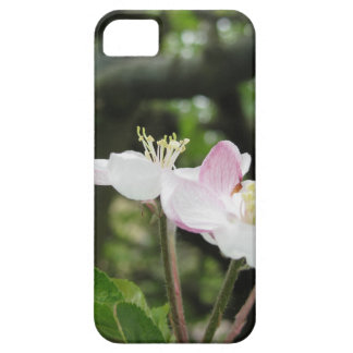 Pink apple flower in spring . Tuscany, Italy iPhone 5 Cover