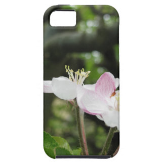 Pink apple flower in spring . Tuscany, Italy iPhone 5 Covers