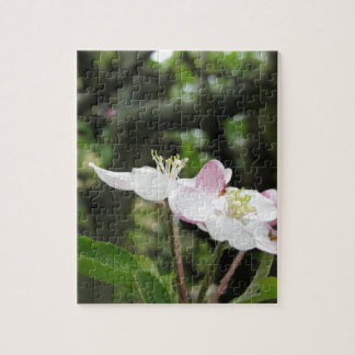 Pink apple flower in spring . Tuscany, Italy Jigsaw Puzzle