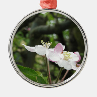 Pink apple flower in spring . Tuscany, Italy Metal Ornament