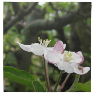 Pink apple flower in spring . Tuscany, Italy Napkin